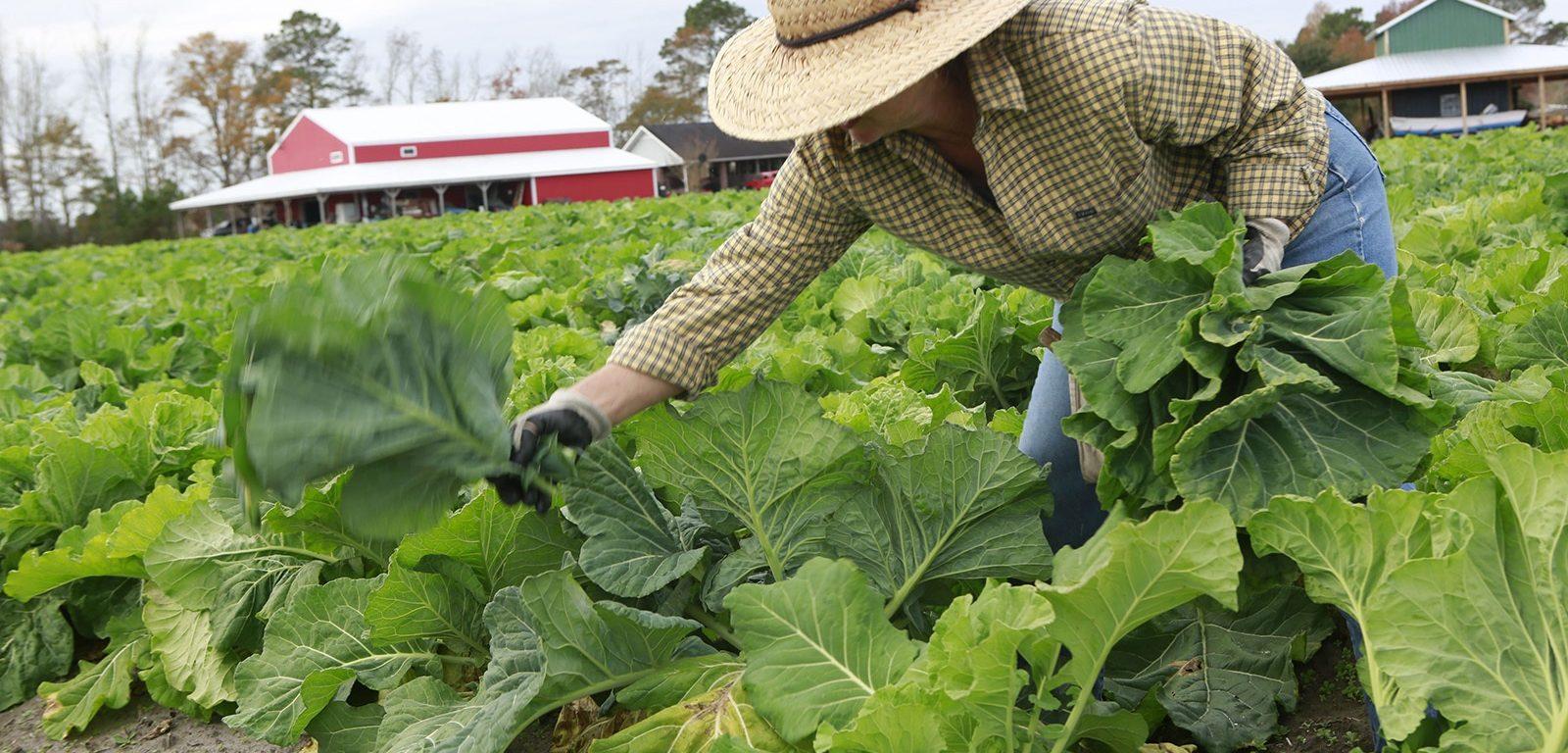 Récoltes traditionnelles optimisées et modernisées